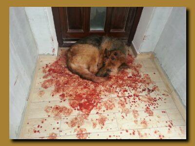 Aktuelle Informationen Zu Tierrechtsthem